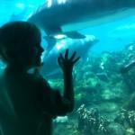 Bren dolphins