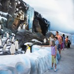 penguin habitat with girl